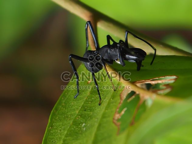 Black bug - Free image #297597