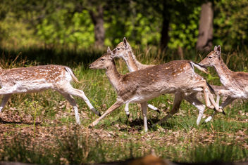 Running fawns - Kostenloses image #298397