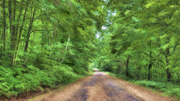 Forest Road - image #298887 gratis