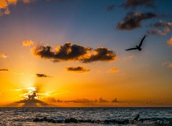 My Florida - Free image #299337