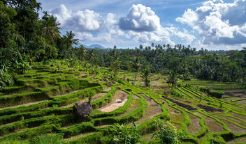 the rice terrace (Bali) - Free image #299787