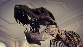 Stan the T-Rex in the Manchester Museum - Free image #299917