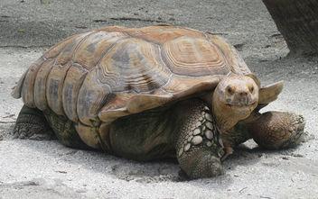 galapagos tortoise - image #299997 gratis