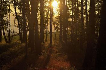 Bosque al atarceder - Free image #300247