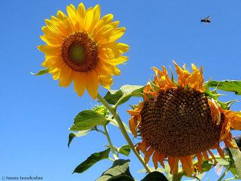 ''bee landing!'' - Kostenloses image #300307