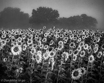 Misty Field - Free image #300527
