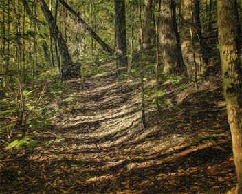 Forest Path - Kostenloses image #300607