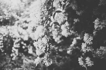 Flower Gardens - image #300627 gratis