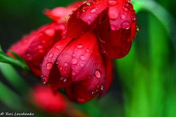 First September rain - image #300767 gratis