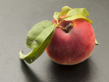 peach - Free image #300997