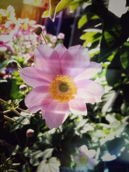 Flower Bokeh - Kostenloses image #301027