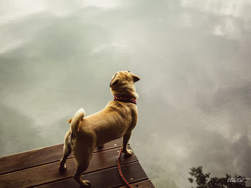 Dog Dienstag - Free image #301057