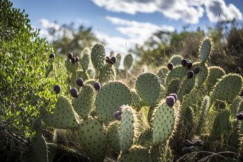 Le monde entier est un cactus ... - Kostenloses image #301177