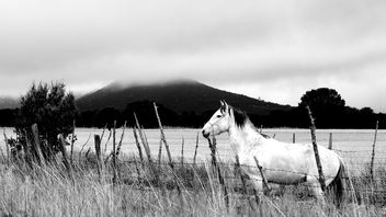 Horse I - Free image #301187