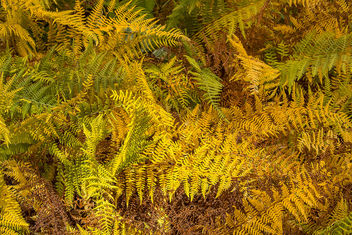 autumn ferns - image gratuit(e) #301217