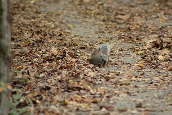 Momma squirrel with her babe in tow - image gratuit #301237