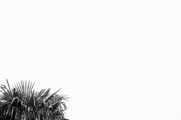 Foliage - image gratuit(e) #301247
