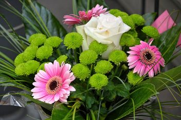 Flowers - Free image #301387