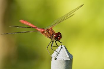 Dragonfly with beautifull wings - бесплатный image #301647