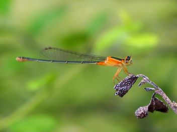 Dragonfly with beautifull wings - бесплатный image #301717