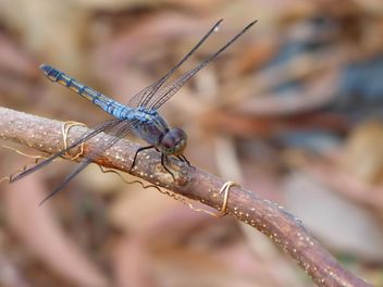 Dragonfly with beautifull wings - image #301727 gratis