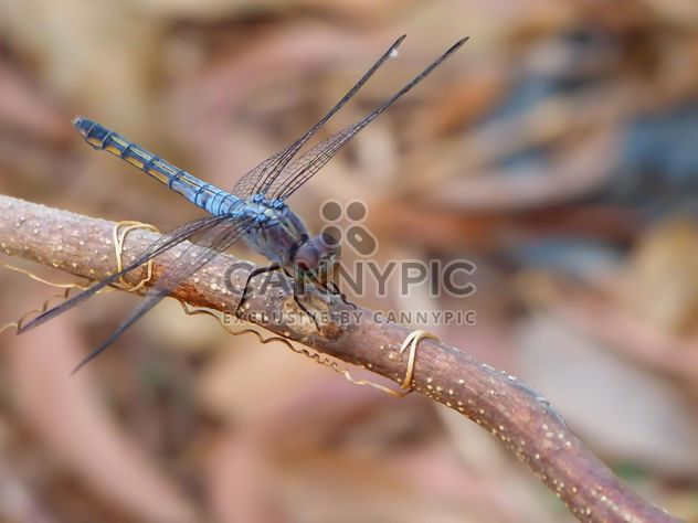 Libellule aux ailes de beautifull - Free image #301727
