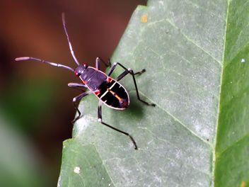 Black bug - image #301737 gratis
