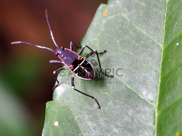 Black bug - Free image #301737