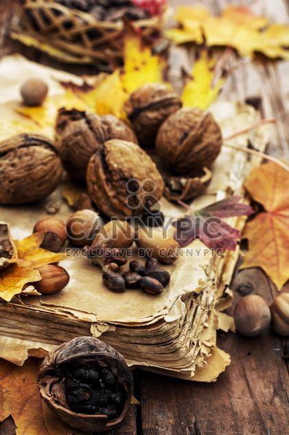 Detalle de hojas y nueces y avellanas en el viejo libro - image #302007 gratis