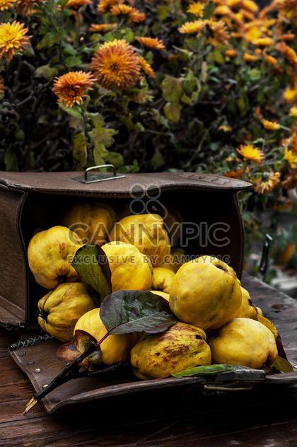 Спелой айвы в сумочке - бесплатный image #302057