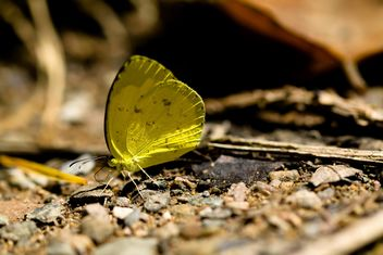 Yellow butterfly on ground - image #303767 gratis