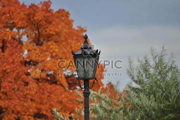 Lantern on a background of yellow foliage - Free image #303807