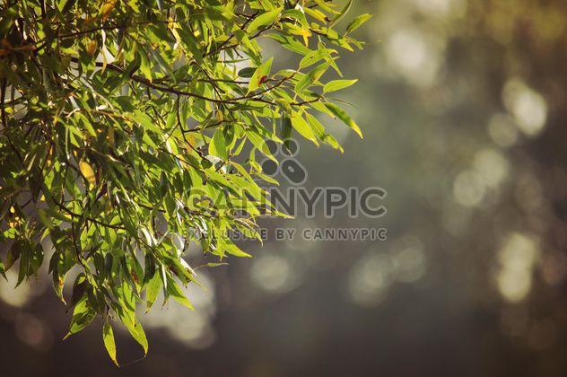Feuilles vertes sur un arbre - image gratuit #303967