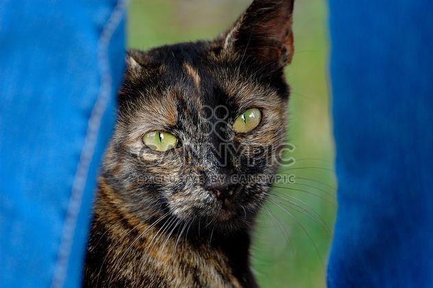 Кошка между ног - бесплатный image #304057