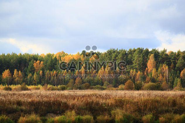 Autumn landscape - Free image #304357