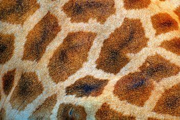 Giraffe spots - image #304517 gratis