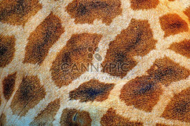 taches de la girafe - image gratuit #304517