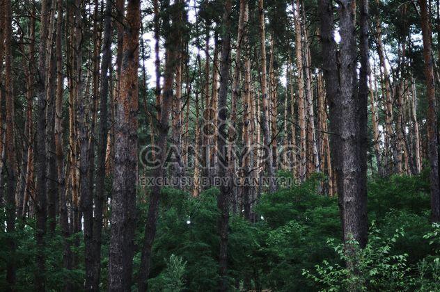 Густой лес - бесплатный image #304757