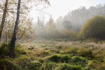 fog... - Free image #305307