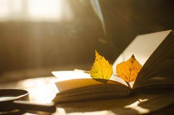 Autumn yellow leaves and book - image gratuit #305357