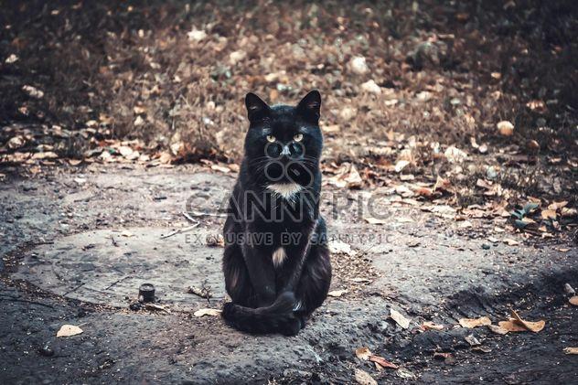 Gato negro serio - image #305407 gratis
