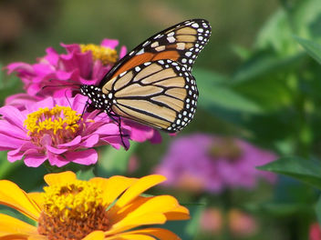 Butterfly soft - Free image #305967