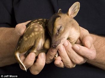 baby deer - Kostenloses image #306157