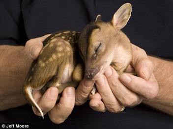 baby deer - image #306157 gratis