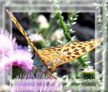 A Butterfly with many Hearts ** - Free image #306507