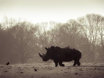 Rhino - Free image #306567