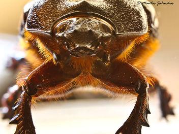 bug portrait - image gratuit(e) #306587