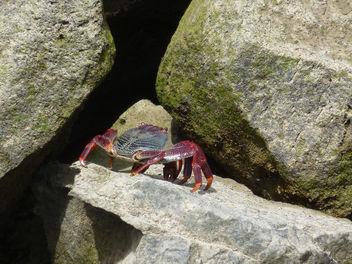Crab - Free image #307167