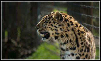 Cheetah - image gratuit #307187