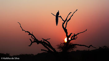 Sunrise at Yala National Park - бесплатный image #307377